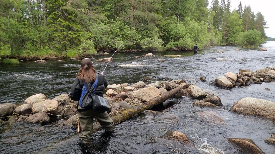 koskikalastus Suomessa