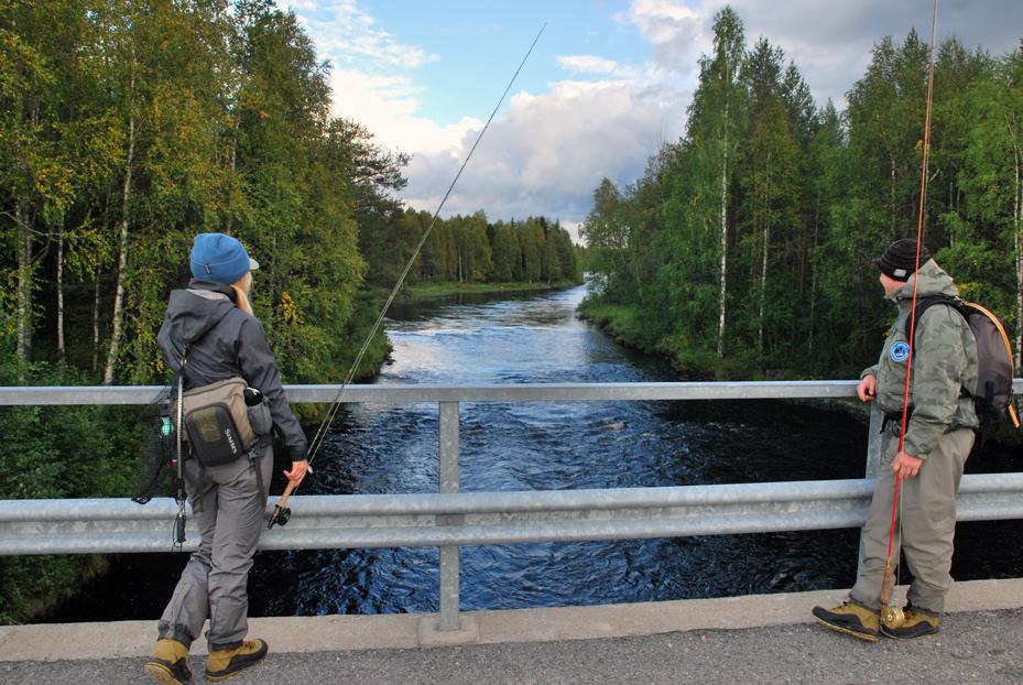 Saunajoki_suomen kosket